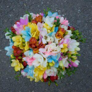 Buchet-de-frezii-multicolore